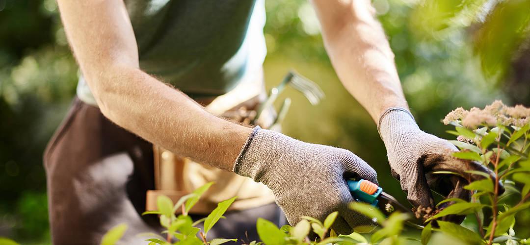 Gemeinsame Gartennutzung im Mehrfamilienhaus – Rechte und Pflichten von Mietern