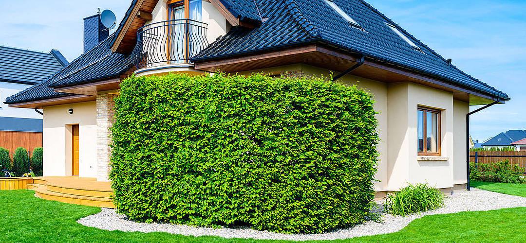 Der richtige Sichtschutz für mehr Privatsphäre im Garten